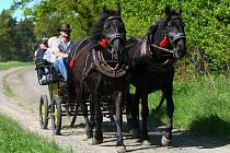 Ve středu slavnostně otevřeli ve Velkém Grunově úplně první jezdecké stezky v Libereckém kraji.