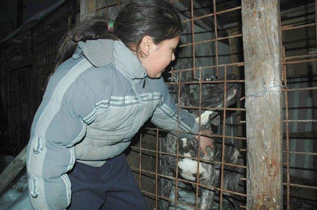 Dcera Jana Tancoše Veronika ukazuje, jak krotký je pes, který ještě před dvěmi měsíci nenáviděl lidi