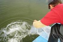 Počátkem října 2015 došlo k dalšímu rozšíření rybí obsádky na Máchově jezeře.