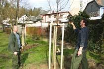 Výsadba zeleně začala tento týden v českolipském městském parku. Necelou stovku stromů, které letos v lednu padly k zemi, nahradí 85 nových dřevin, mezi nimi i jabloně.
