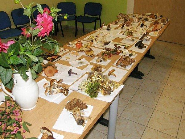 Výstava hub vTuhani.