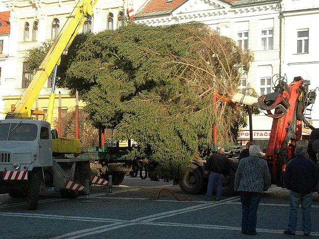 Vánoční strom pro Českou Lípu.