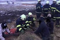 Dvě jednotky hasičů a traktor vysvobozovaly vyčerpaného a vyděšeného koně, který uvízl v rozbahněném poli v Zákupech.