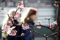 Nadprůměrně vysoké únorové teploty matou přírodu.