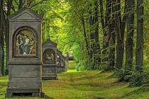 KŘÍŽOVÝ VRCH U CVIKOVA. Lipová alej podél křížové cesty je stará přesně 130 let.