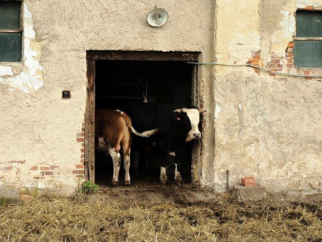 Sociální farma fungovala přes dva roky.