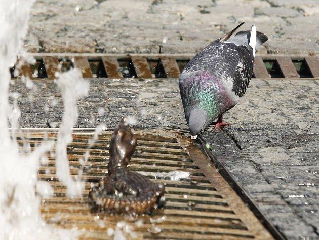 V těchto dnech zvířata zápolí především se suchem a vedrem.