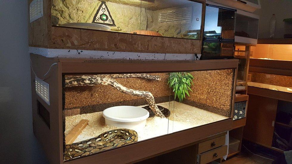Konopí dvojice mužů pěstovala v jedné z části domů. Další část domu byla obsazena terárii s hady, ve kterých měl zálibu jeden z bratrů.