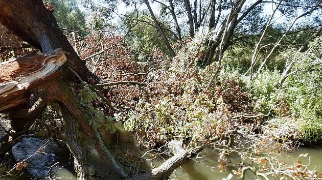 U popadaných stromů se občas tvoří doslova fronty vodáků. Ivona Fidrantová Mnohdy není pro stromy ani vidět řeka.