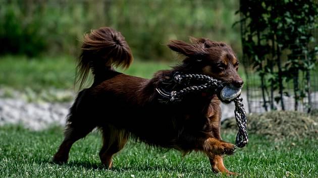 Ilustrační snímek. Pes