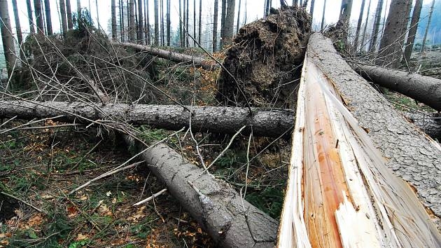 Následky orkánu Kyrill v lesích Lužických hor.