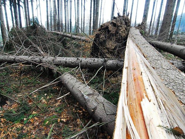 Následky orkánu Kyrill vlesích Lužických hor.