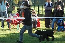 Závody v agility O pohár města Mimoň zde uspořádal místní klub OSA Mimoň.