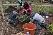"""Hned dvacet rhododendronů přibylo v Horových sadech před letním kinem v Novém Boru. Zasadili je lidé, kteří se zapojili do obnovené městské akce """"Zasaď si svůj strom""""."""