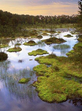 Milovníci a přírody mohou během léta vyrazit na procházku sprůvodcem po naučné stezce Swamp a dalších zajímavých přírodních lokalitách Máchova kraje.