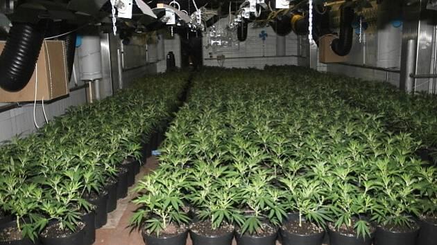 Pěstírnu se skoro 2800 rostlinami konopí objevili policisté v areálu bývalých jatek v polovině prosince 2013.