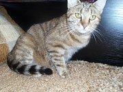 Příběh tříleté kočky jménem Mourek měl šťastný konec.