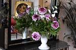 S nevšední výstavou květin, které zbožňoval i v Zákupech pěstoval císař Ferdinand Dobrotivý, opět spojili organizátoři symbolické pokřtění jedné z nových odrůd.