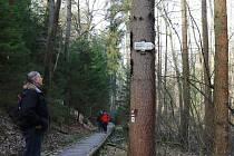 Národní přírodní památka Peklo u Zahrádek na Českolipsku je u turistů oblíbená.