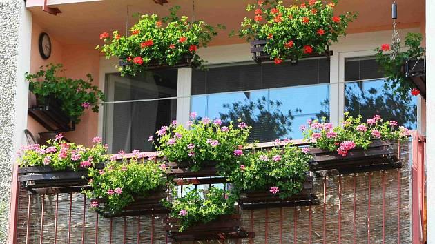 Okna a balkony jsou samý květ.