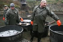 Na výlovu Novozámeckého rybníka v Zahrádkách od úterního rána pracovali rybáři a brigádníci z Rybářství Doksy.