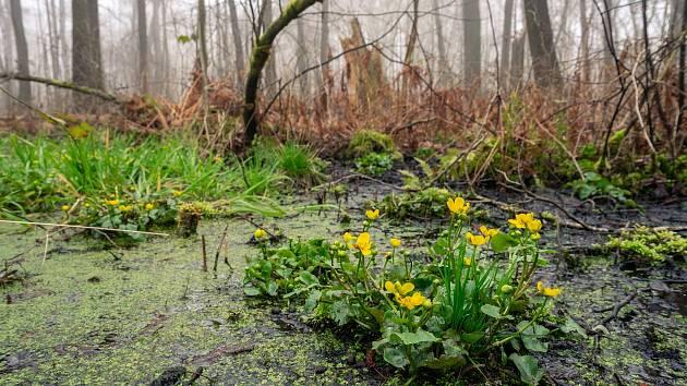 Ze zanedbané lokality vznikne Novoborská Amazonie.