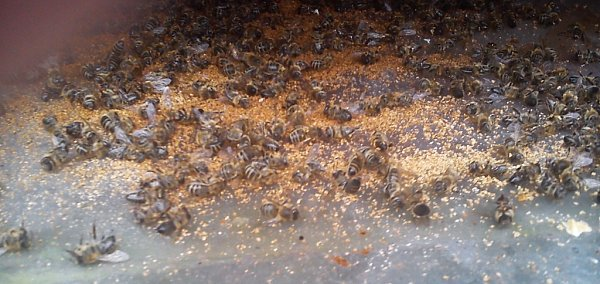 Zanedbaný včelín na kraji lesa uSloupu vČechách, okterý se nikdo nestará, může být ohniskem nákazy.