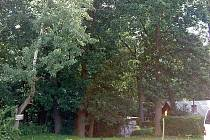 O čtyři desítky vzrostlých stromů nechtějí obyvatelé Žizníkova přijít.