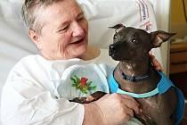 Canisterapie je v českolipské nemocnici oblíbená.
