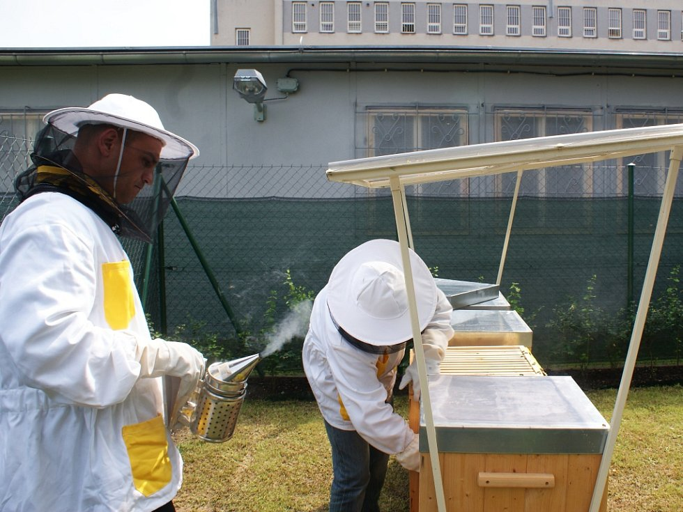 Věznice ve Stráži pod Ralskem ve čtvrtek slavnostně odstartovala projekt Včelaření.