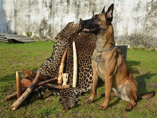 Mise v Kongu, které se jako první český pes účastnila fenka Cama se svou cvičitelkou Hanou Böhme.