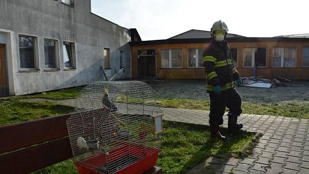 Hasiči zachránili zavaleného papouška, který přežil ničivý požár.