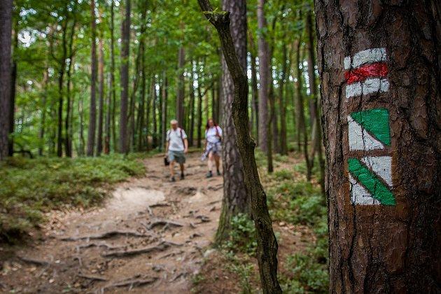 Členové klubu českých turistů provádí značení turistické trasy ve Sloupu v Čechách na Českolipsku. Snímek je z 5. července.