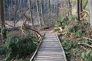 Už nyní za bledulemi do národní přírodní památky Peklo u Zahrádek na Českolipsku vyrážejí první turisté.