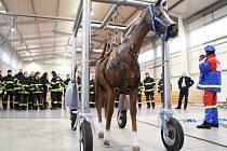 Síť, se kterou se hasiči v Brně učili pracovat, lze použít do hmotnosti 750 kg a kromě koní se s ní dají vyprošťovat i krávy a telata.