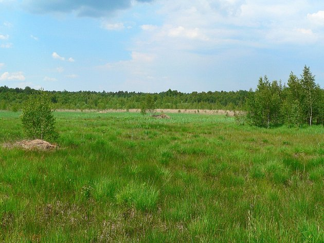 Vokolí Jestřebí je velké množství rašelinišť, vnichž se vyskytují vzácné druhy rostlin a živočichů.
