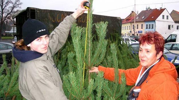 Prodej vánočnich stromků