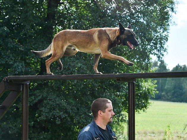 Výcvik služebních psů vHeřmanicích.
