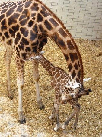 Nový sameček dostal jméno Tatum.