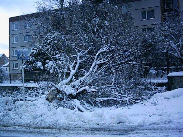 Strom tíhu sněhu nevydržel