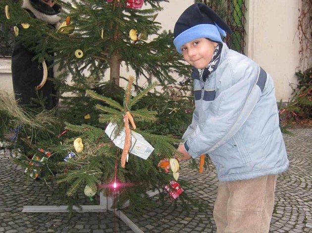 Vánoce v museu