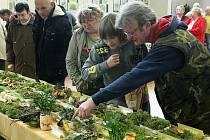 Stovky hub nasbíraných kolem Mimoně obdivovaly desítky houbařů na každoroční výstavě hub ve zdejším klubu seniorů.