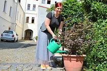 Mluvčí České Lípy Kristýna Kňákal Brožová zalévá květiny na nádvoří radnice z nové nádrže na 5 tisíc litrů vody ze střech radnice.