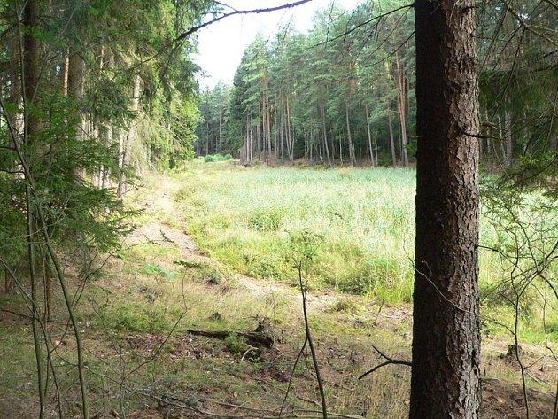 Za tři a půl milionu korun plánují lesníci zRalska stavbu rybníku Novodvorský V. na vodní kaskádě na Svébořickém potoce uMimoně.