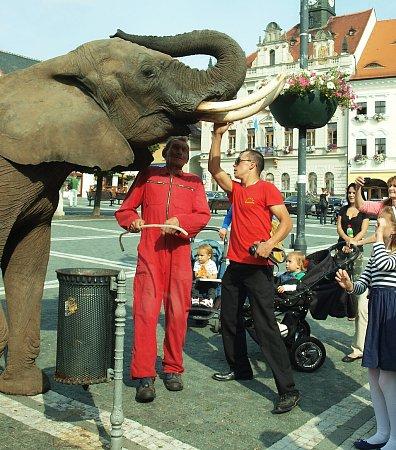 Cirkusoví sloni vyrazili vúterý odpoledne na českolipské náměstí, kde byli vobležení kolemjdoucích.