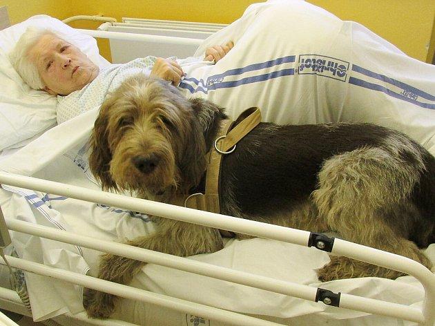 Sklienty těchto oddělení lůžek sociální péče a lůžek následné péče českolipské nemocnice budou nově dvakrát do měsíce pracovat fenka Andělka a pes Aruf Canini Corde.