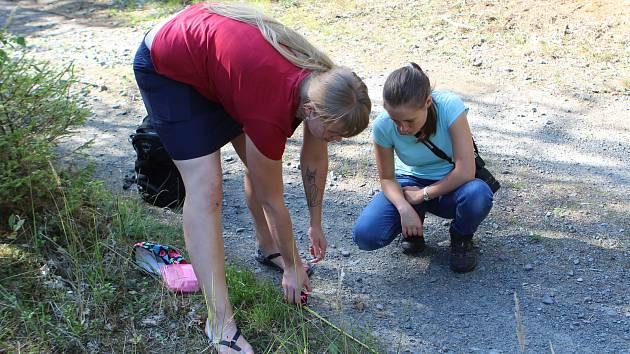 Čtveřice nováčků se učila poznat a dokumentovat stopy vlků, kteří ve zdejším regionu žijí.