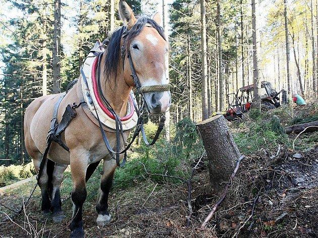 Práce na odstranění kalamity budou probíhat až do jarních měsíců, dokud všechno dřevo nebude blíž k lesní cestě.