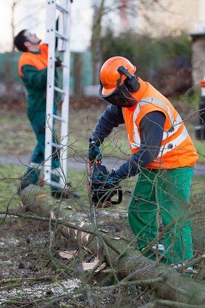Radnice nabádá, aby lidé byli kvůli probíhajícímu kácení více obezřetní a dbali případných pokynů pracovníků odborné firmy.