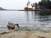 Máchovo jezero se letos upouští o zhruba 170 cm. Kvůli odbahnění zátoky a revitalizaci pobřeží ve Starých Splavech.